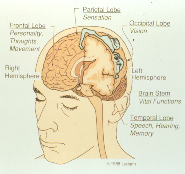 ghaly neuro surgeon - map of brain functions, Human Body